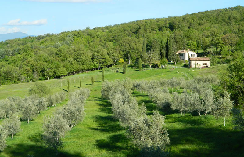 View at the podere from the olive grove